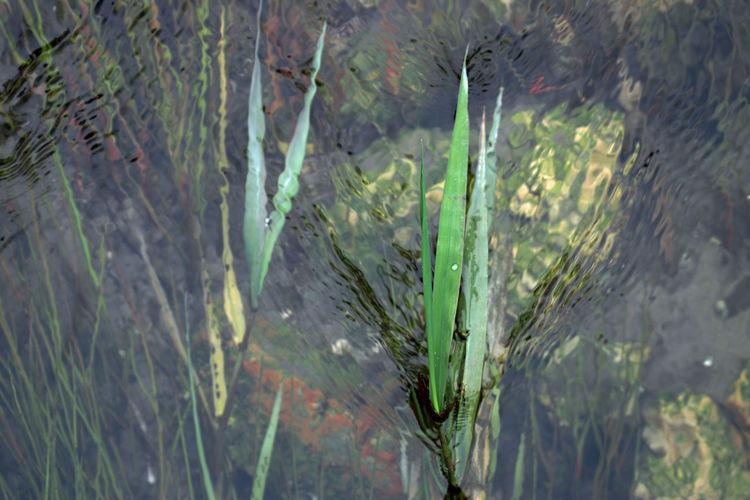 Close-up of wet plants during rainy season