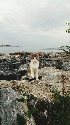 Catlovers Kadikoy Moda From My Lens Kedi Aşkı Kedidir Kedi Kedidirkedi Kediseverler Kedi Kediler Benimobjektifimden Benimkadrajim Capture The Moment