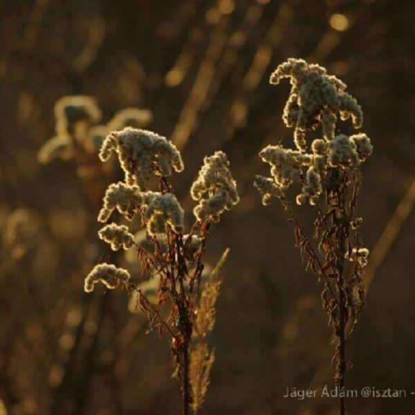 Fényfürdő - Apajpuszta Nature Sundown Flowers Puszta