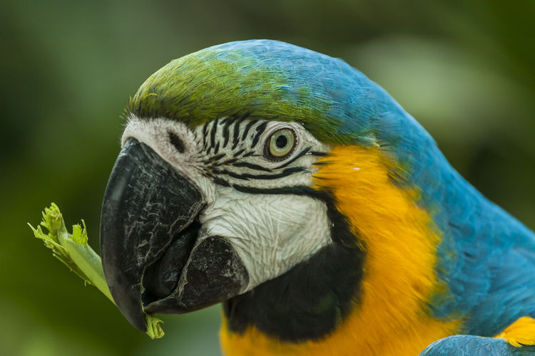 Temaiken Ara Ararauna Psittaciformes Animal Animal Themes Animal Wildlife Animals In The Wild Bird Close-up Focus On Foreground Gold And Blue Macaw Guacamayas Guacamayo Azulamarillo Macaw Nature No People One Animal Outdoors Parrot