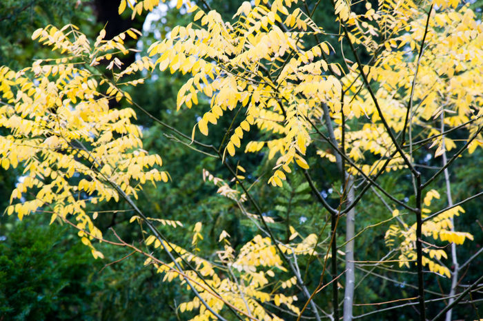 Autumn Autumn Colors Beauty In Nature Close-up Czech Republic Day Fragility Freshness Grebovka Growth Havlickovy Sady Nature No People Outdoors Park Plant Prague Sunlight Tree Yellow
