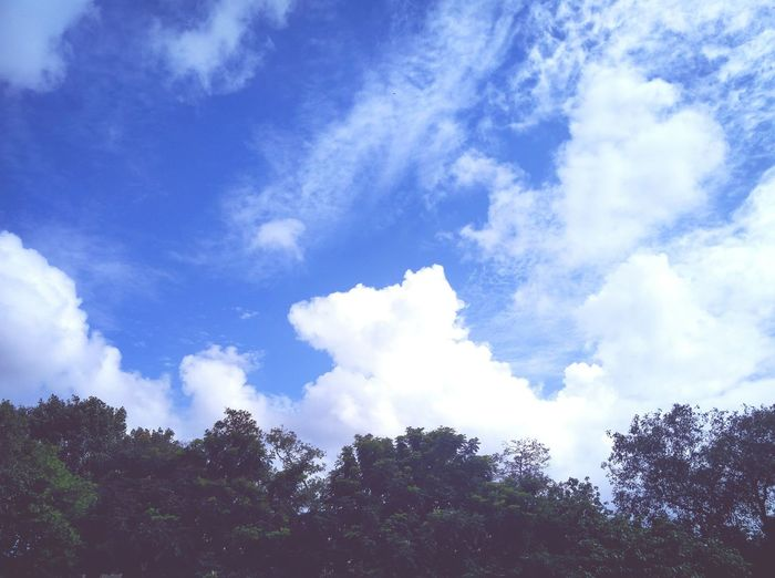 A Pleasant Afternoon, Mumbai Sky Blue Scenics Cloud - Sky Beauty In Nature Outdoors Green Color Low Angle View Tree Nature Majestic Cloudsporn First Eyeem Photo