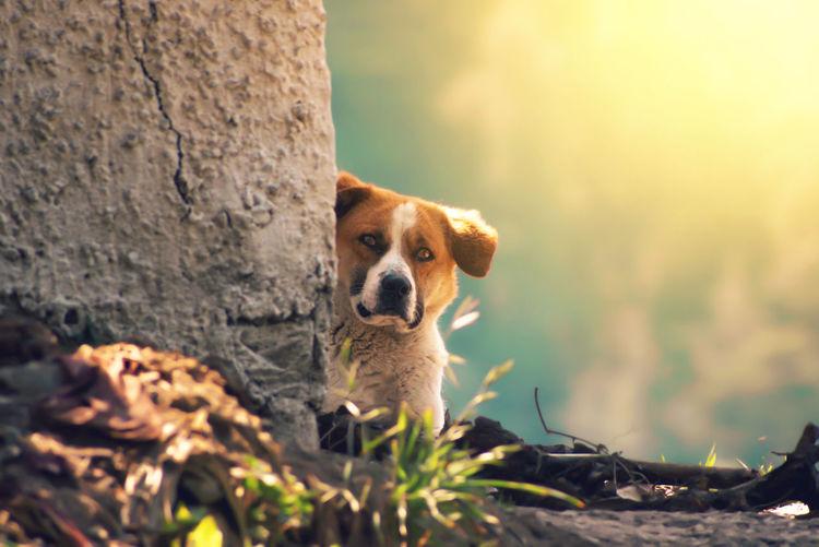 Dog in a mud
