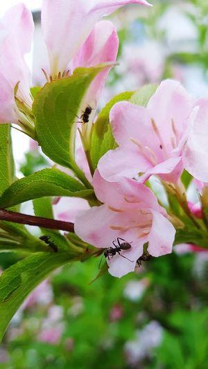 Ameisen und