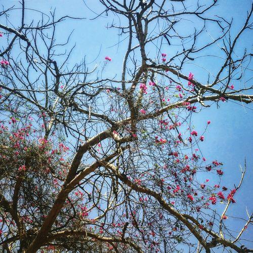 Sommerzeit Jnu Schönes Wetter♥ Baummitblümen