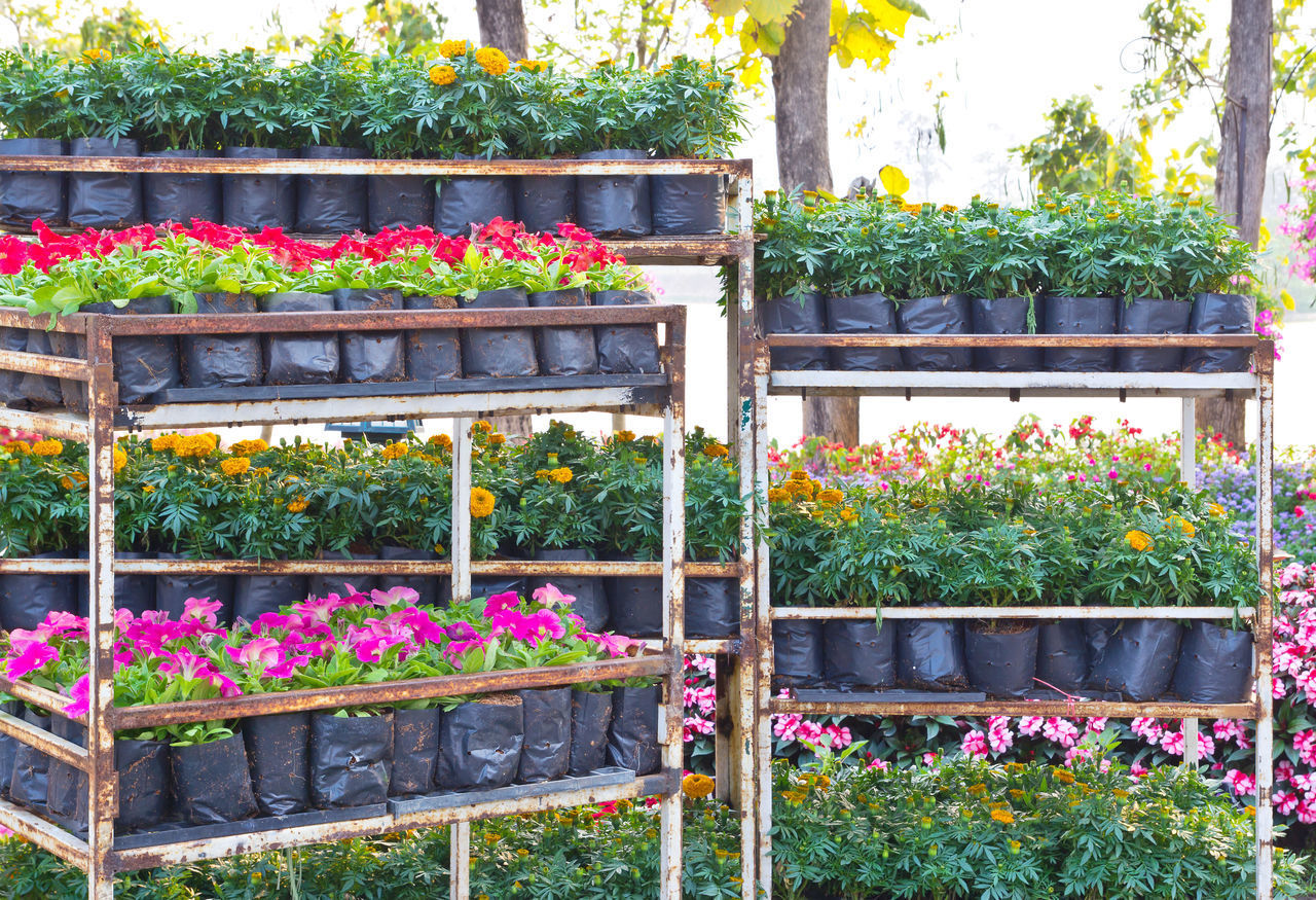 POTTED PLANTS ON FLOWER POT