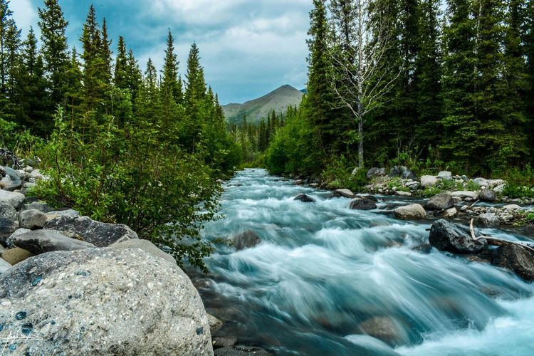 Denali National Park, Alaska Tree Motion Water Nature Beauty In Nature River Tranquil Scene Long Exposure Scenics Forest Sky Rock - Object Waterfall Outdoors No People Day Tranquility Cloud - Sky Landscape Mountain