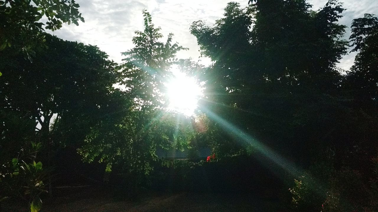 tree, sunbeam, nature, growth, tranquility, sunlight, lens flare, beauty in nature, forest, tranquil scene, idyllic, sun, outdoors, day, low angle view, scenics, no people, sky