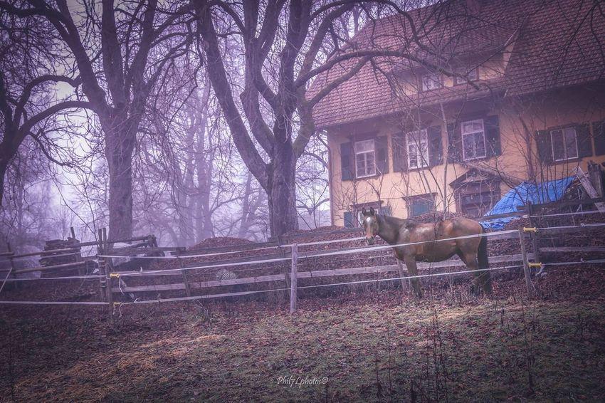 Nature Landscape_photography Photography Fotografia Photographer Phil7lphotos Photooftheday Taking Photos Schwarzwald Photo Landscape #Nature #photography