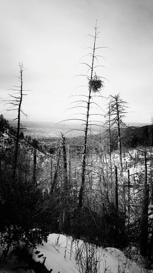 Deadpine Bird Nest Pino Canyon Trail Albuquerque Newmexico Black And White Its Cold Outside Hiking❤ Showcase: January