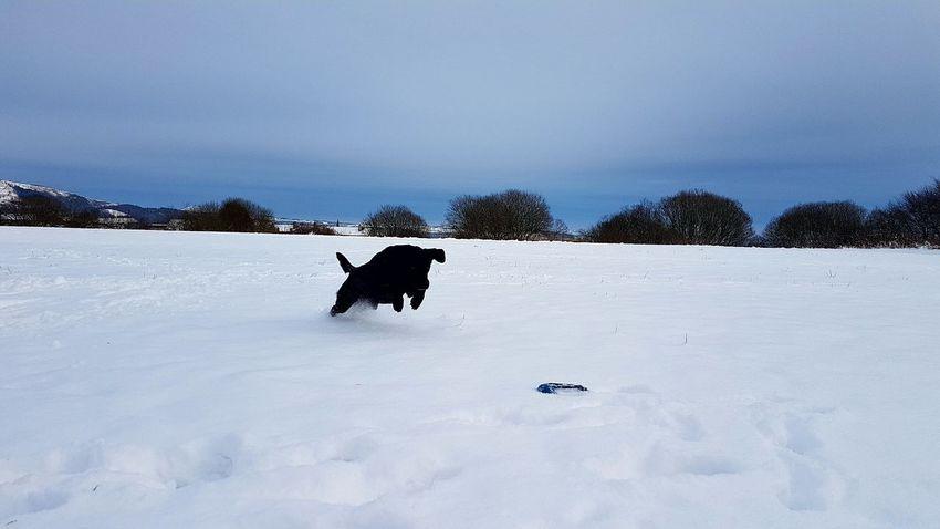 Snow Cold Temperature Winter Animal Themes Animal Animals In The Wild Animal Wildlife