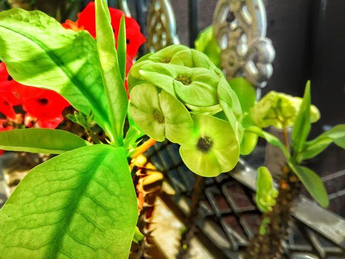 natural beauty Flower Flower Head Leaf Close-up Plant Green Color Plant Life Passion Flower Leaf Vein Leaves Blossom