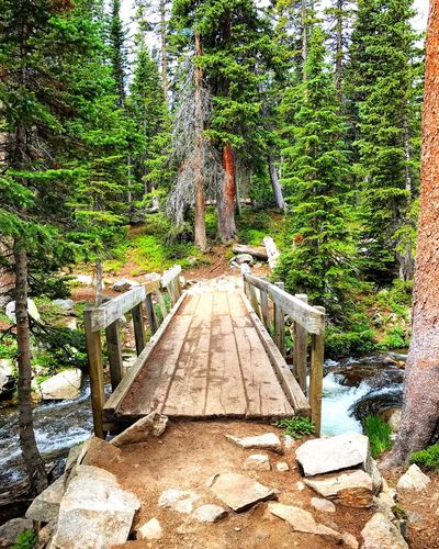 Crossing Over Tree Nature Forest Outdoors Beauty In Nature Coloradogram Colorado Mountians Coloradophotographer Colorado Photography Colorado Outdoor Life Colorado Life Brainard Lake Tranquil Scene Travel Destinations Hiking Indian Peak Wilderness Bridge Forest Photography Explore Beautiful Crossing