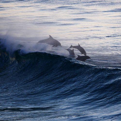 Dolphins at Bondi on Sunday. What before anyone was down there for the city2surf... #sydney #ilovesydney #olympusinspired #bondi #igerssydney #dolphins #visitnsw #australia Dolphins Sea