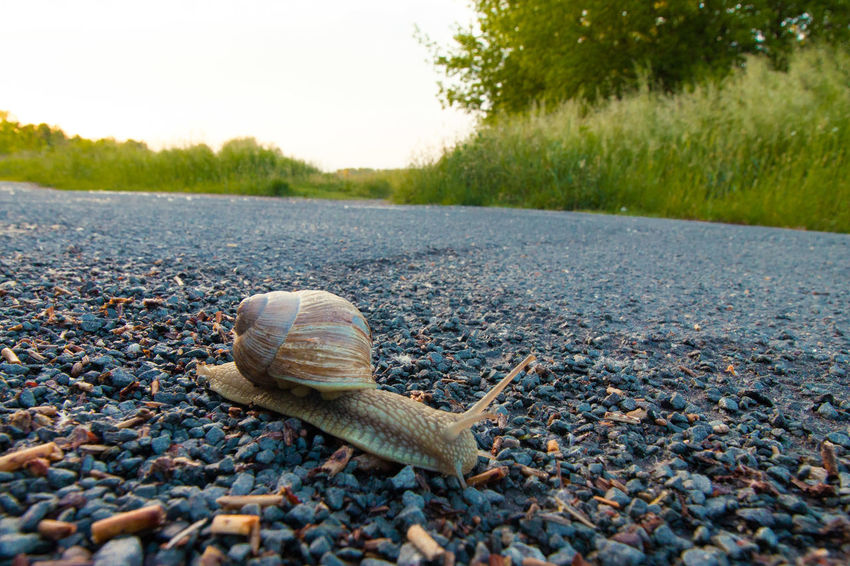 Animal Animal Antenna Animal Shell Animal Themes Beauty In Nature Close-up Day Focus On Foreground Ground Natural Pattern Nature No People Outdoors Selective Focus Shell Snail Surface Level Tranquility Weinbergschnecke Wildlife