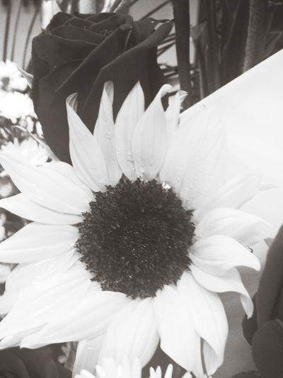 Flowers Blackandwhite Ecuador ANGELICA JATIVA RUIZ