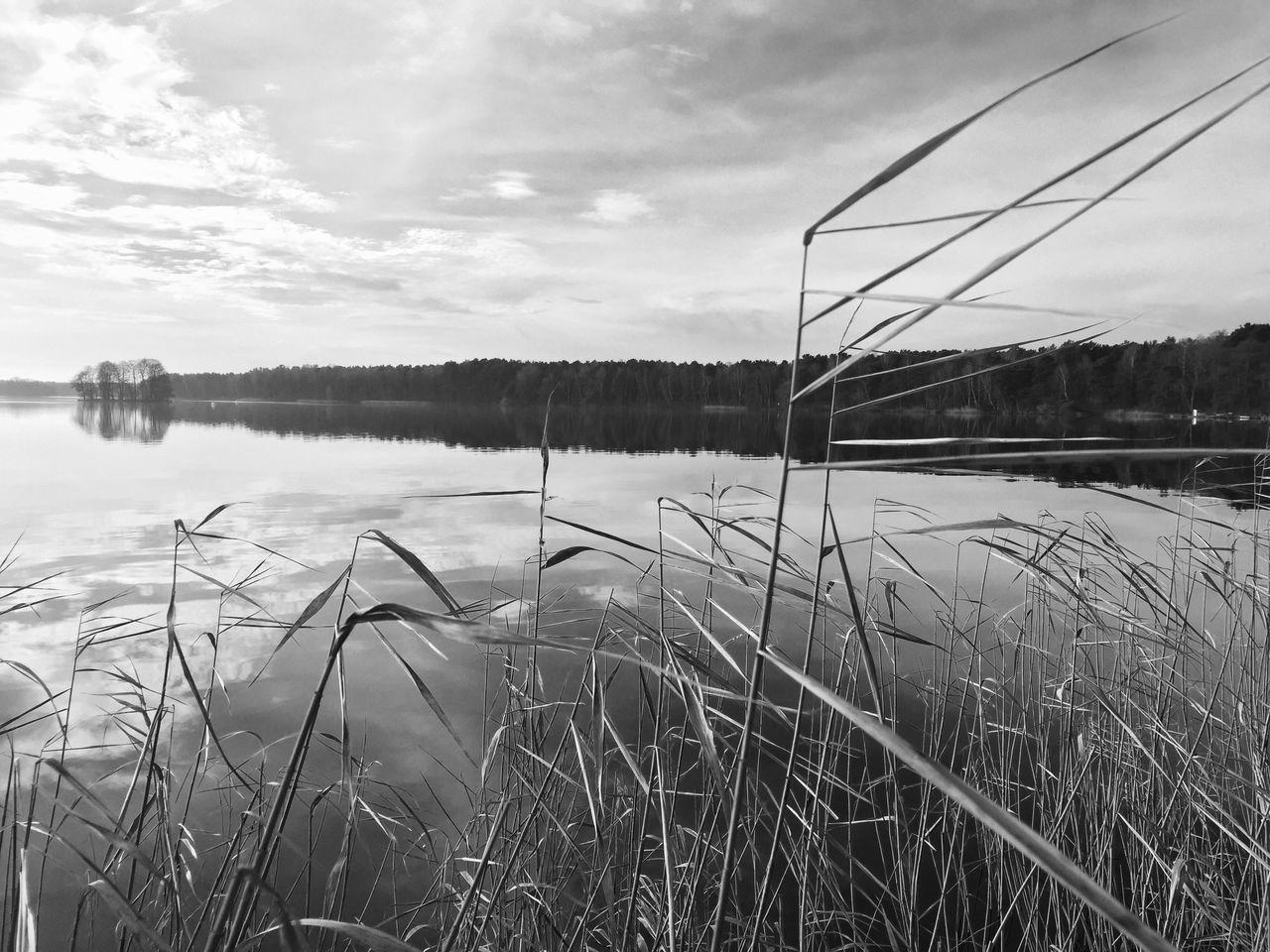 Reed Growing On Lakeshore Against Sky