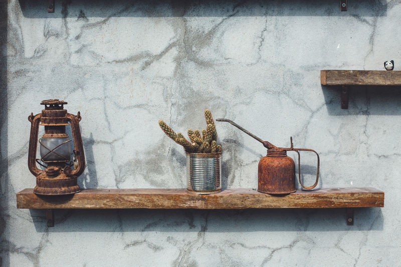 Cactus with vintage objects on shelf against wall