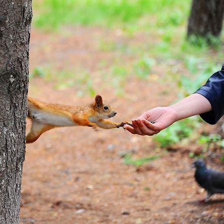 🐹🐾🌲 Brave Squirrel Feed  ForestPark Nature Animal Omsk белка советский парк омск