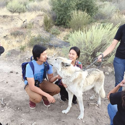 Palmdale Wolves♥ Wolf Nature South California Nature Walk Pets Wolf Dog Travel Destinations Travel Photography Travelers Married Married Couple Honeymoon Togetherness Bonding Connected By Travel