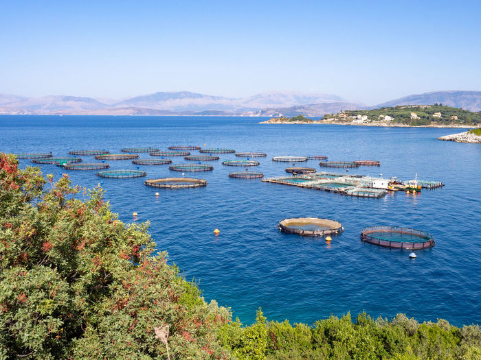 Fish farming on Corfu island Water Sea Scenics - Nature High Angle View Nature Outdoors Bay No People Sky Beauty In Nature Greece Corfu Island Green Green Color Travel Vacations Holiday Summer Destination Fish Farm Travel Destinations Fish Farming Cage Ionian Sea Greek Islands
