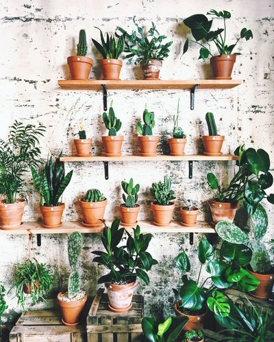 Monstera Cacti Cactus Wall Cafe Barcelona Green Decoration Plant Potted Plant Plant Shelf Herb Basil Variation Growth No People Leaf Planting Freshness