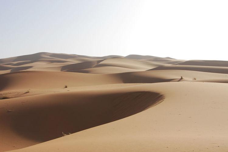 Sahara Desert Morocco Desert Desert Beauty Sand Inspiration Landscape Sahara Desolate Vast Trek Sand Dunes Loneliness Isolation Heat Summer Shadow Nature Horizon Remote Climate Arid Climate Land Sand Dune Environment Scenics - Nature