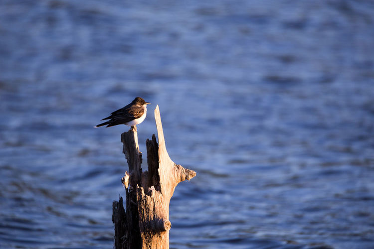 Bird perching on wooden post in lake