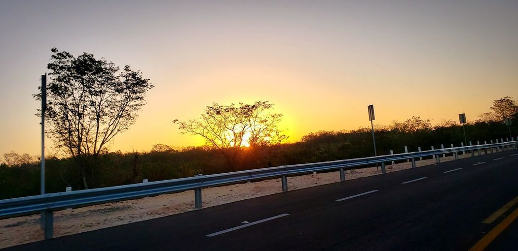 The Mobile Photographer - 2019 EyeEm Awards Tree Sunset Road Winter Beauty Sunlight Sky Landscape