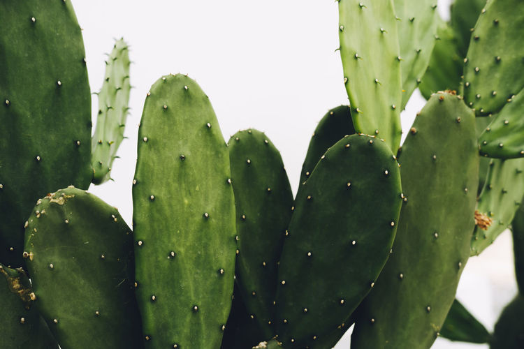 Close-up of water drops on cactus plant