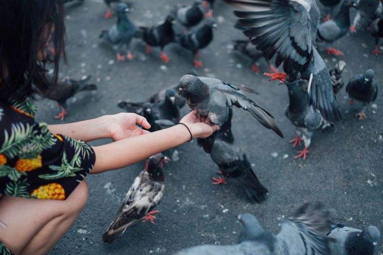 Woman With Pigeons On Road
