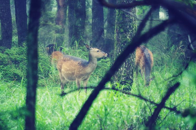 deer forest wild animal