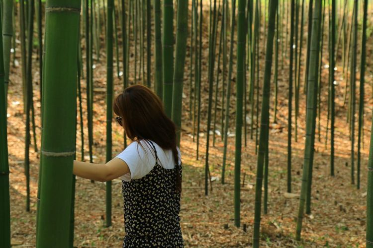 Side View Of Woman Amidst Bamboo Plants In Forest