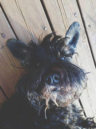 Iamarabbit Pretty Doggyc00l