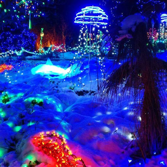 *Winter delights* Vancouver British Columbia Canada Snow Christmas EyeEm Best Shots Night Illuminated Multi Colored Outdoors Tree Winter Nature City