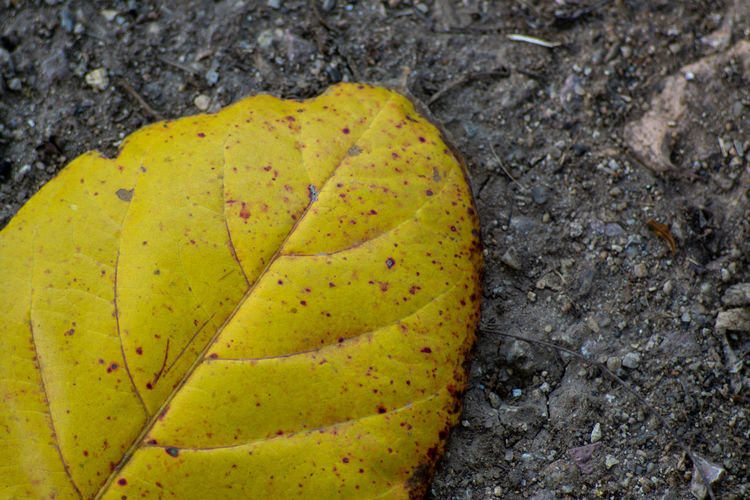 Yellow leaves falling on the ground. Close-up Leaf No People Plant Part Yellow Nature Day High Angle View Directly Above Outdoors Plant Fragility Land Freshness Vulnerability  Beauty In Nature Rock Rock - Object Change