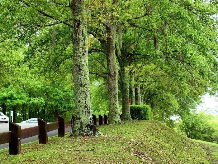 Nature Green
