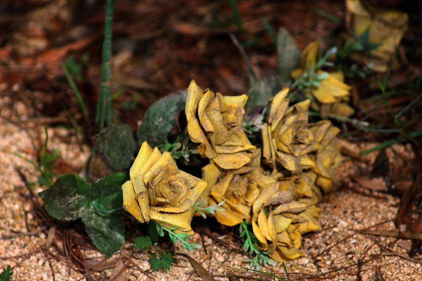 Paint The Town Yellow Dry Leaves Nature Yellow Flower Abstract Beauty In Nature Bouquet Close-up Day Detail Deterioration Dirt Dry Dry Flower  Flower Flower Head Flowers Ground No People Outdoors Rose - Flower Yellow Yellow Color Yellow Flowers Yellow Rose The Week On EyeEm