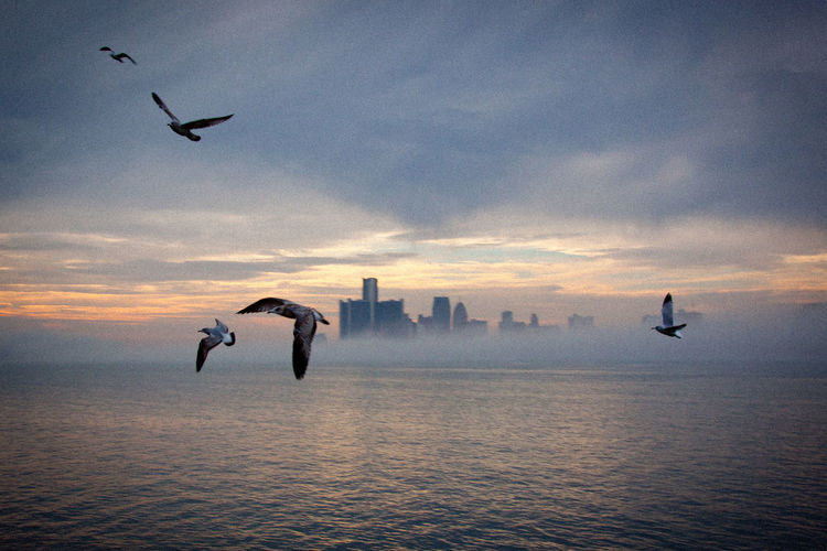 Detroit´s skyline from Belle Isle Architecture Building Exterior Flying Skyscraper Spread Wings Sunset The Architect - 2017 EyeEm Awards Urban Skyline Waterfront