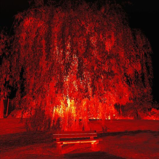 43 Golden Moments On Fire Glowinthedark Hanging Out Taking Photos Check This Out Hello World Relaxing Enjoying Life Amazing Beautiful Magical Today's Hot Look Modern Art Bench Tree Red