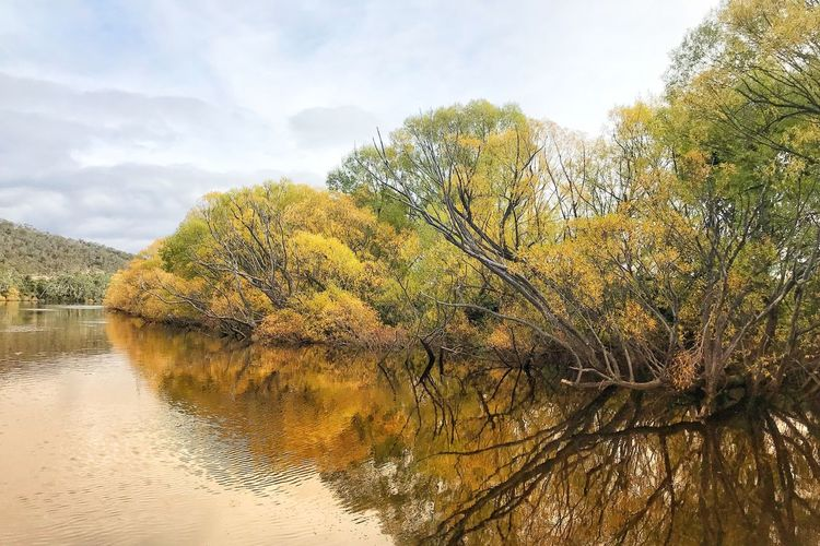Tasmania Autumn Tree Plant Sky Tranquility Water Beauty In Nature No People Nature Scenics - Nature Outdoors Reflection Tranquil Scene