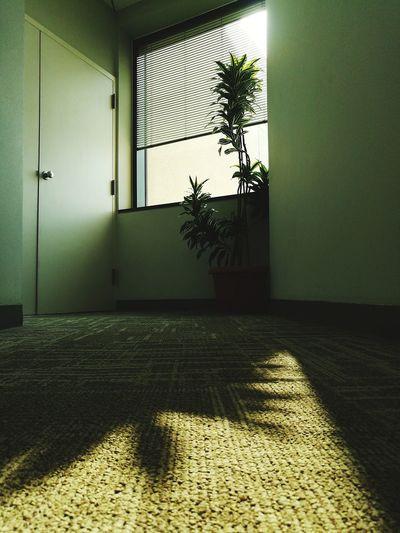 sunlight Office Officeplants Quiet Places #people #streetphotography Door Entryway Building