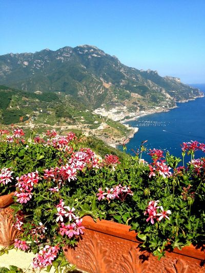 Amalfi Coast Coastline Basket Of Flowers 🌷 Pink Flower Italy Amalfi Coast Plant Flowering Plant Flower Beauty In Nature Growth Nature Mountain Day Freshness No People Tranquility Water Sky Scenics - Nature High Angle View Land Outdoors