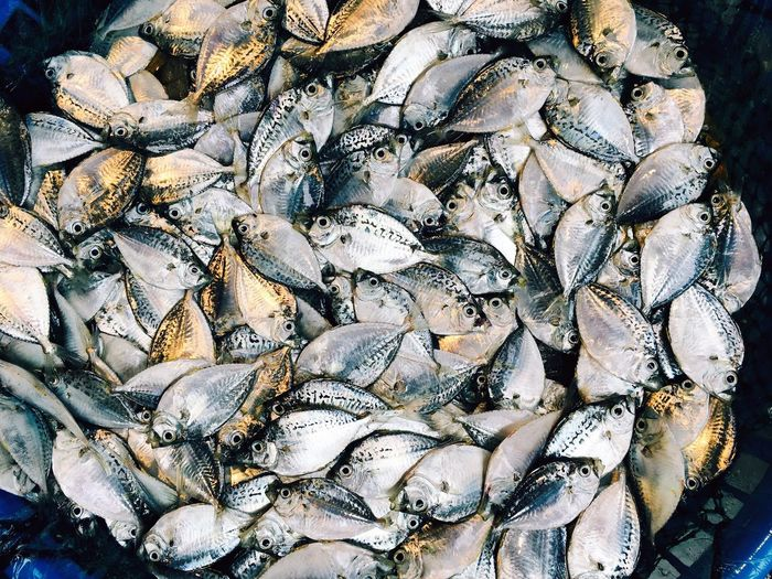 fish Seafish Fish Beautifully Organized