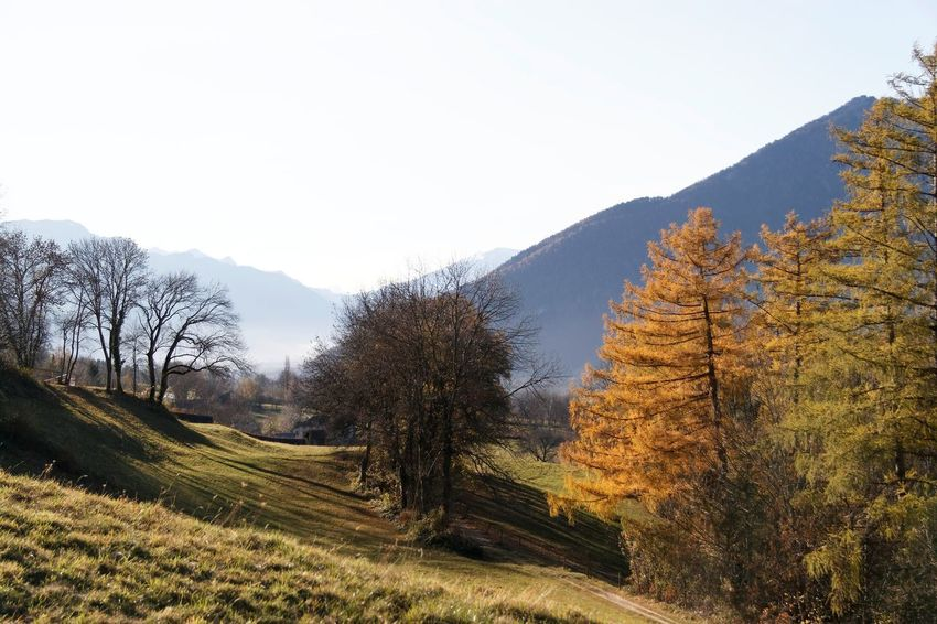 Bare Tree Beauty In Nature Day Landscape Larch Tree Larix Mountain Nature No People Outdoors Rural Scene Scenics Sky Tree