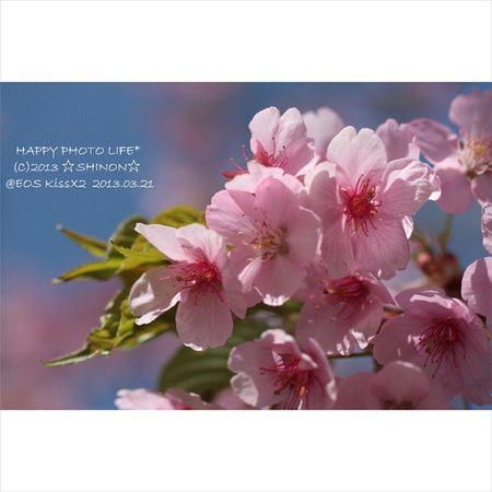 3.11 * 少しでも早く 心から 春の訪れがありますように * 3 .11 祈り 過去写真 桜 春 EOSKissX2 Canon Canon_photograph