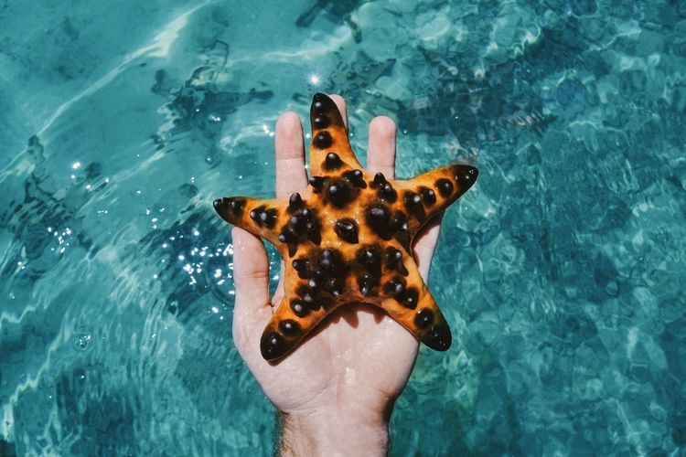 Close-up of hand holding starfish against sea