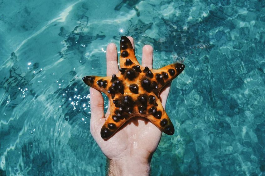 Seastar Orange Color Turquoise Water Sea Beach Nature Animals INDONESIA Sulawesi Bunaken Hand From My Point Of View TakeoverContrast Beautifully Organized Sommergefühle Neon Life Done That. 10