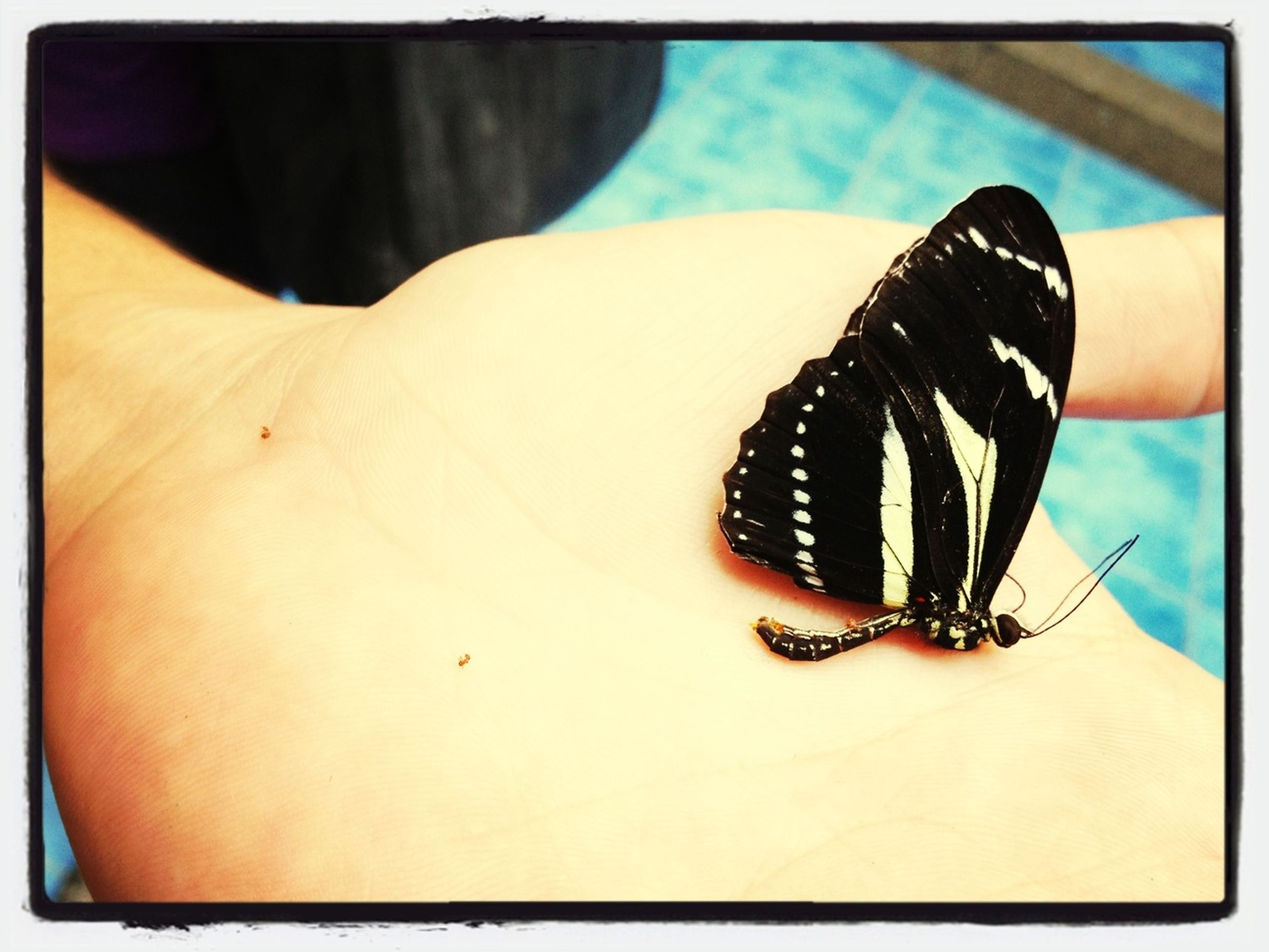 transfer print, insect, one animal, wildlife, close-up, animal themes, animals in the wild, auto post production filter, person, part of, human finger, focus on foreground, unrecognizable person, cropped, butterfly, holding, day