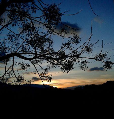 """...No non è mai abbastanza.."" 🎶🌻🌻 #emotions #serenity  #peace #silence Silhouette Sunset Tree Nature Scenics Sky Tranquility"